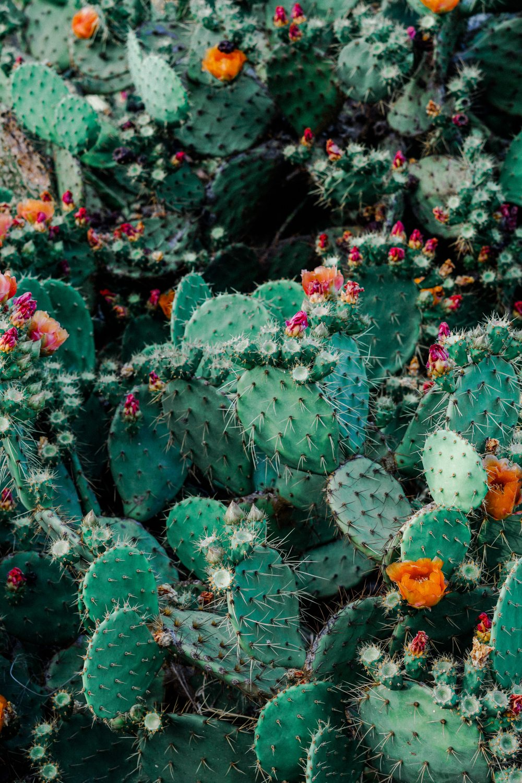 botanical-cacti-cactus.jpg