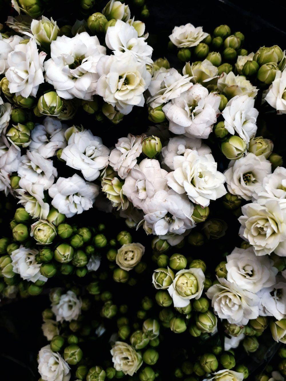 beautiful-bloom-blooming.jpg