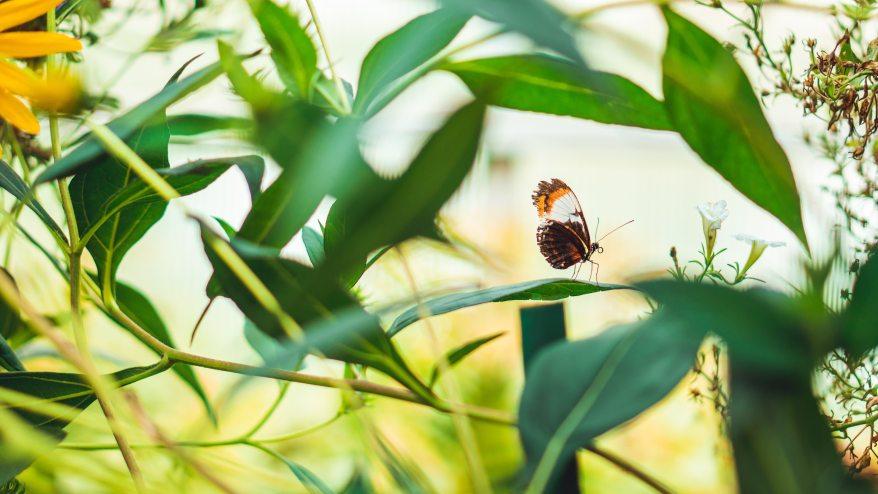 Butterfly .jpg