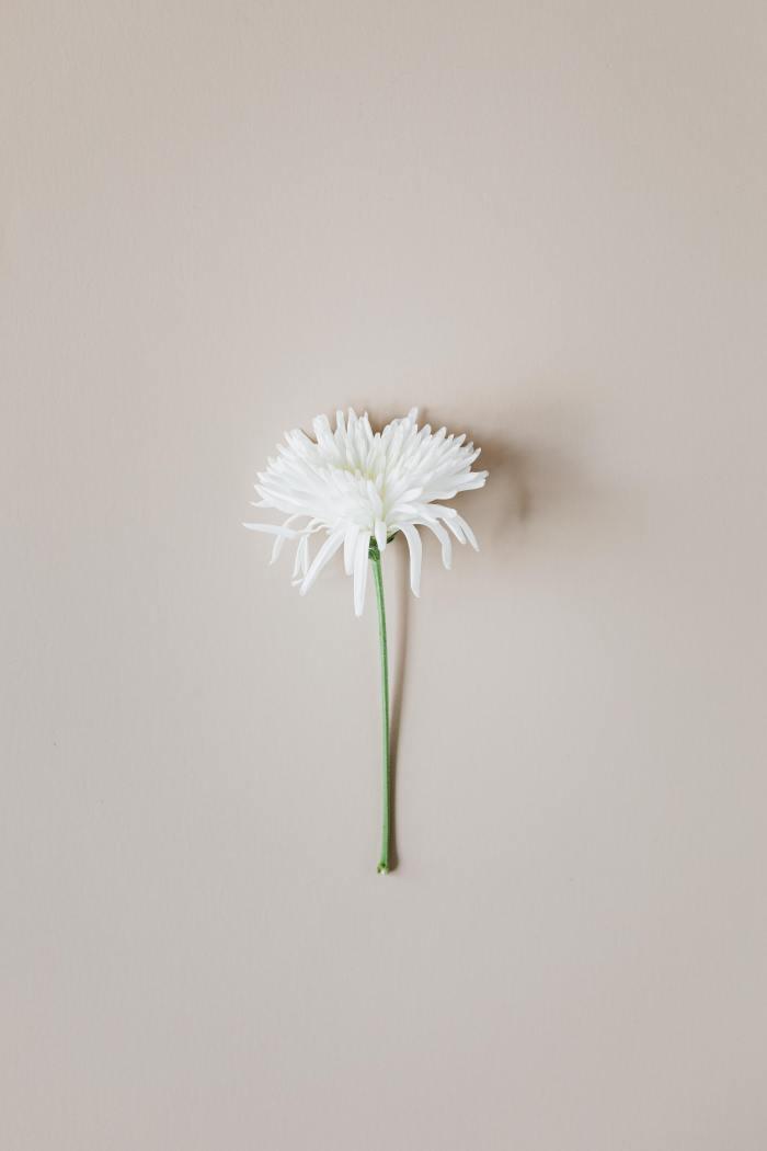 white flower brown background