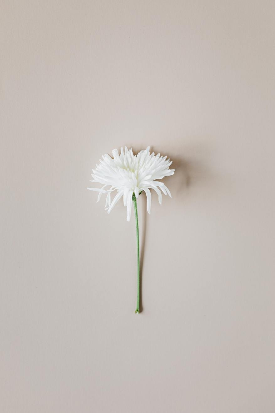 white flower brown background